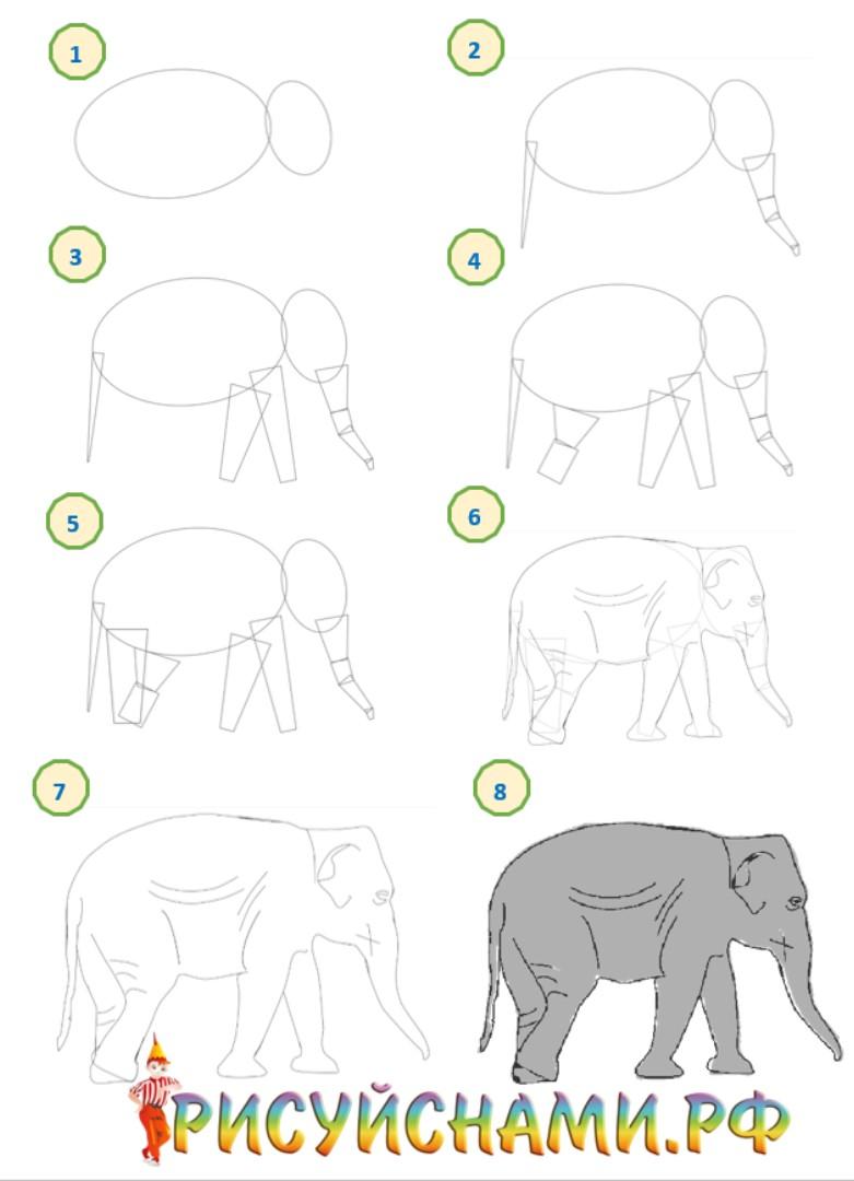 поэтапное рисование слона карандаш и кисть