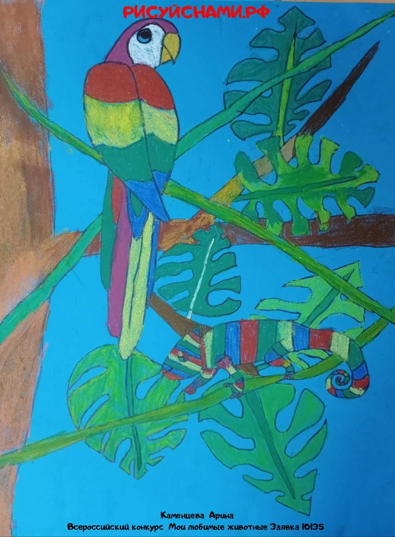 Всероссийский конкурс  Мои любимые животные Заявка 10135  творческие конкурсы рисунков для школьников и дошкольников рисуй с нами #тмрисуйснами рисунок и поделка - Каменцева  Арина