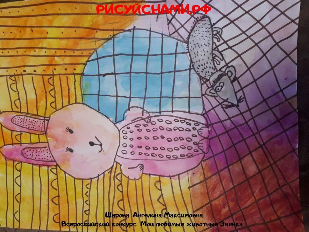 Всероссийский конкурс  Мои любимые животные Заявка 10496  творческие конкурсы рисунков для школьников и дошкольников рисуй с нами #тмрисуйснами рисунок и поделка -  Шарова  Ангелина Максимовна