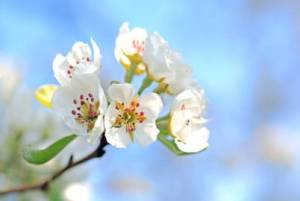Конкурс Волшебная Весна