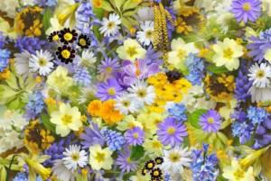 Конкурс В мире цветов