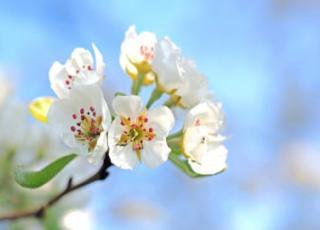 Волшебная Весна - всероссийский творческий конкурс (рисунок, поделка, фото)